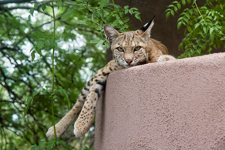 Mother Bobcat 660kb.copy - Copy
